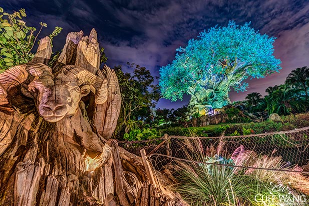 A ram staring out of the Tree of Light at Animal Kingdom